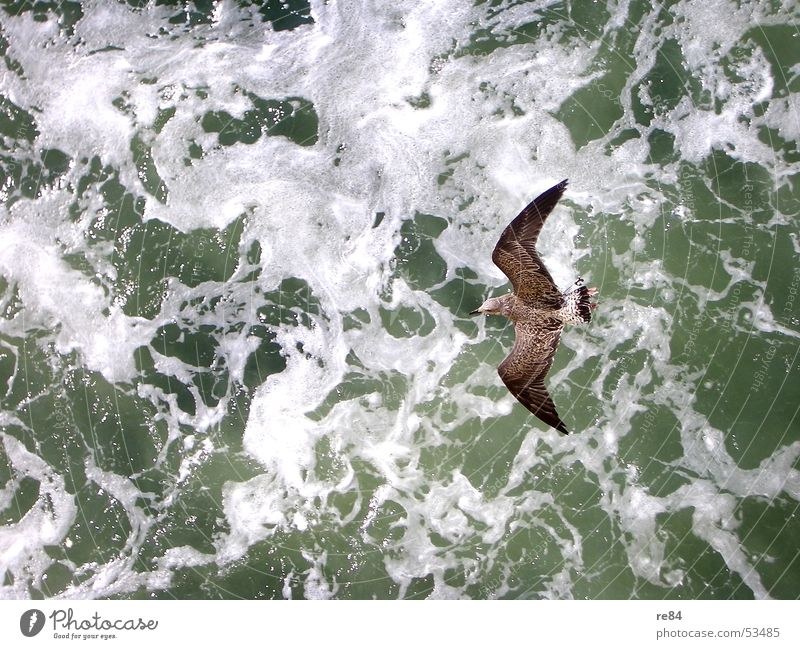 Winds of Change Seagull Bird Ocean Netherlands Waves Animal Pattern Green White Black Brown North Sea Flying Water Force Contrast Detail Feather Helgoland Power
