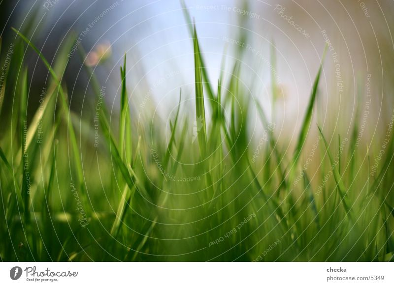Plant Summer Meadow Grass Spring