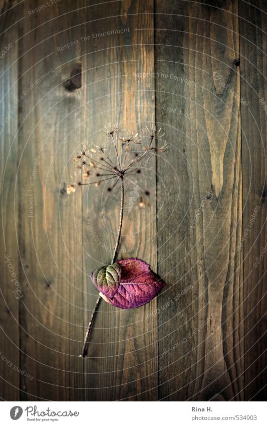 Leaf Autumn Natural Art Change Transience Hang Wooden wall