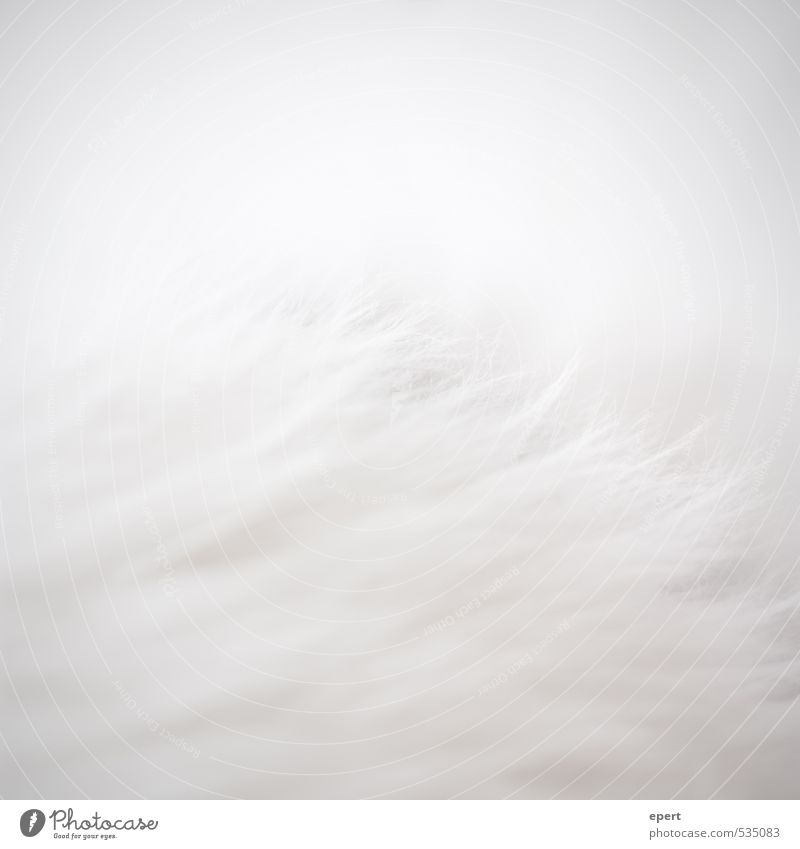 Polar bear in front of iceberg Pelt Hair and hairstyles White-haired Carpet Esthetic Simple Uniqueness Soft Gray Perspective Pure Colour photo Subdued colour