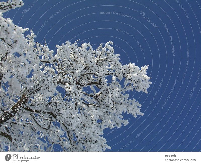 a beautiful winter day ... Tree Snow Sunbeam White Sky To go for a walk Branch Blue