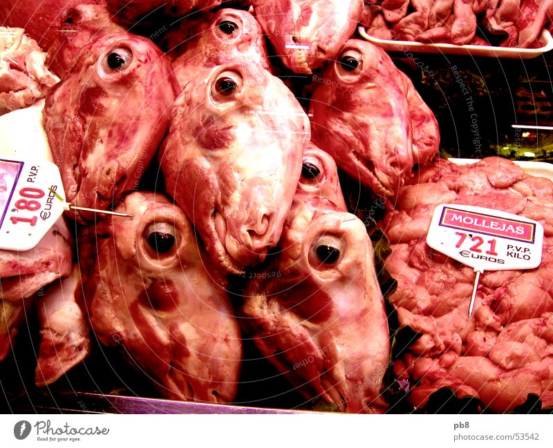 meat inspection Meat Sheep Nutrition Spain Barcelona Red Shop window Butcher Eyes Mouth Lamb Markets Blood head market