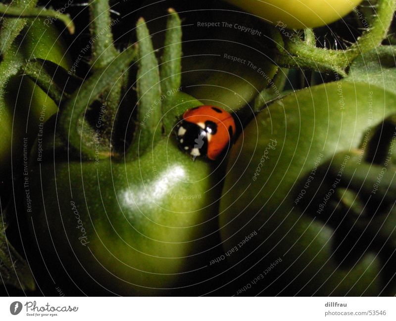 Marienkaefer sleeping place Ladybird Caresses Round Meadow Plantation Red Green Summer Safety (feeling of) Contentment Dinghy Sleep Yellow Bow Insect Beetle