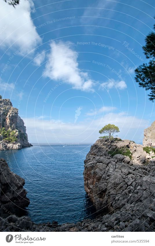 More sea again. Environment Nature Landscape Elements Earth Air Water Sky Beautiful weather Tree Rock Coast Ocean Island Esthetic Mediterranean sea Majorca
