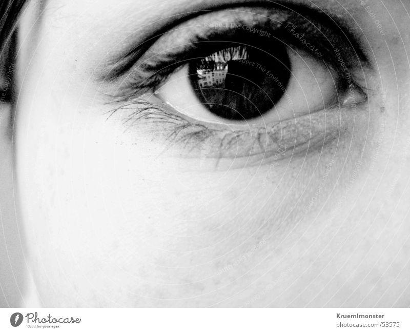 view Black Eyelash Eye shadow Pupil Eyes Looking Black & white photo