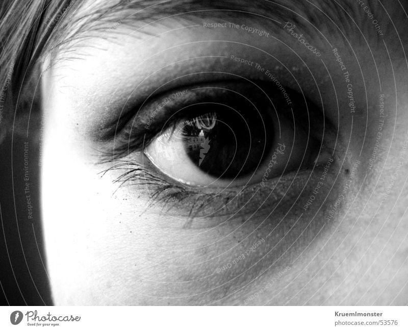 eye-catcher Eyelash Eye shadow Pupil Eyes Looking