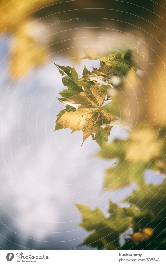 Nature Blue Green Plant Tree Leaf Animal Yellow Autumn Wood Illuminate Seasons Decline Smooth Faded Exchange