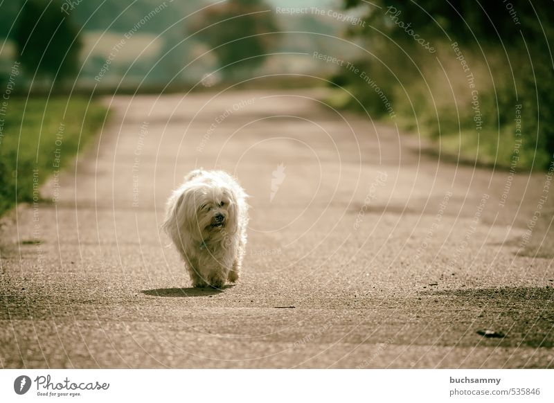 Lonely Dog Nature Animal Autumn Beautiful weather Tree Grass Field Street Lanes & trails Pelt Long-haired Pet 1 Going Small White Loneliness best friend bichon