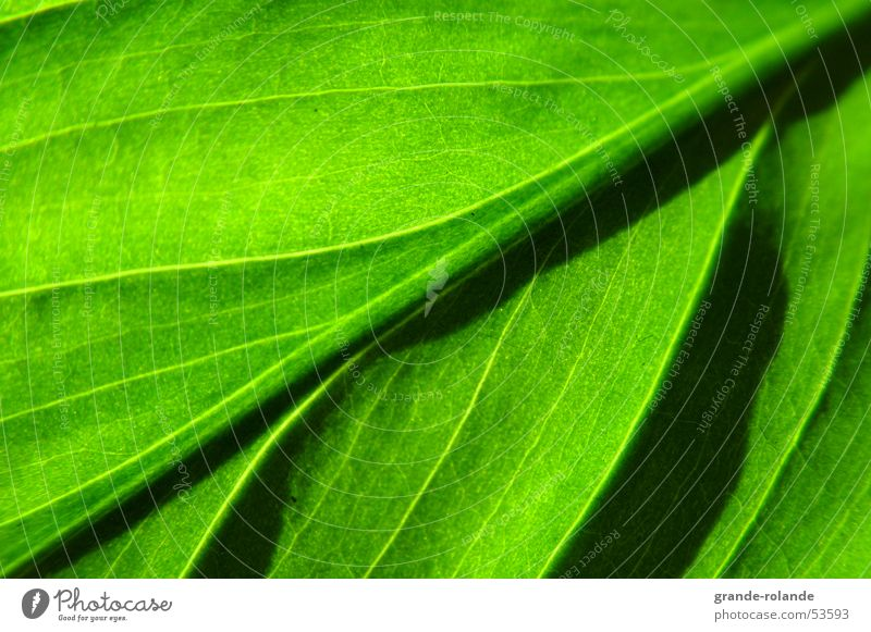Nature Green Leaf Diagonal Organic produce Bright green