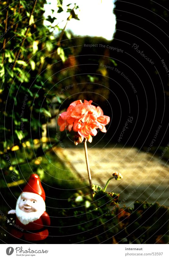 flower gnome Flower Garden gnome Red Delicate Pink Plant Garden plants Blossom Blossoming Friendliness Green Hedge Humor Conservatism Garden plot Horticulture