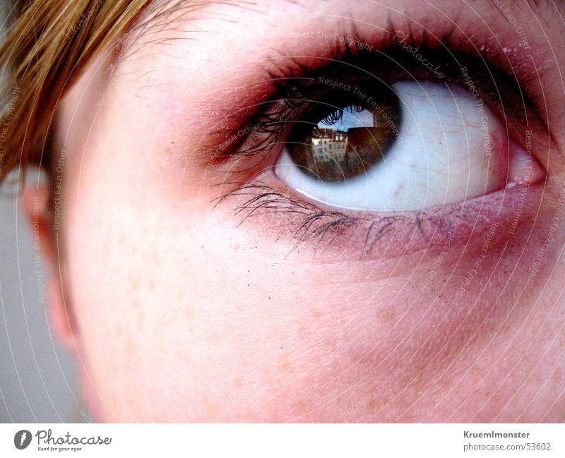 Eyes Eyelash Pupil Eye shadow