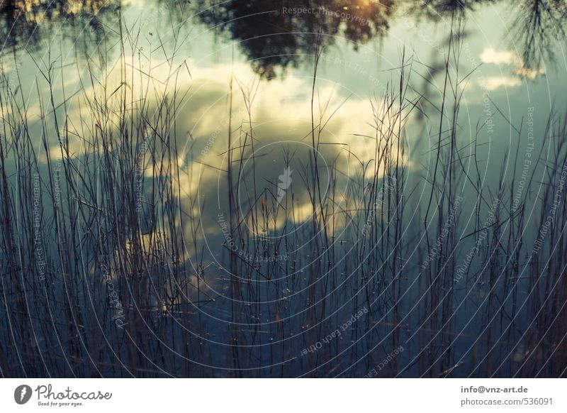 In the mirror Environment Nature Landscape Water Sky Clouds Autumn Plant Bushes Fern Lakeside Pond Moody Reflection Colour photo Exterior shot Deserted