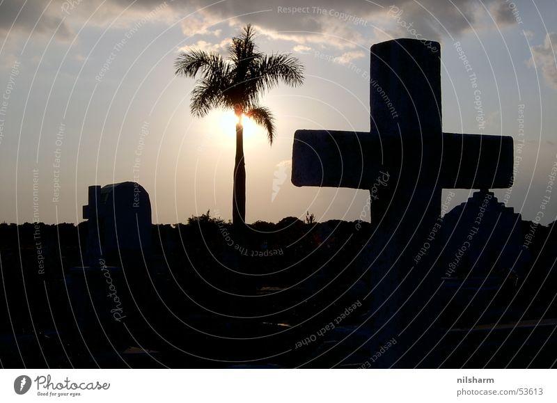Cemetery in Cuba Palm tree Back-light Sun