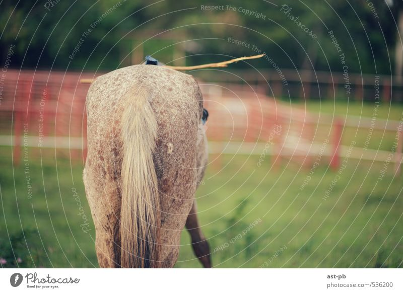horse's back Nature Grass Horse Testing & Control Stick ready to go Colour photo