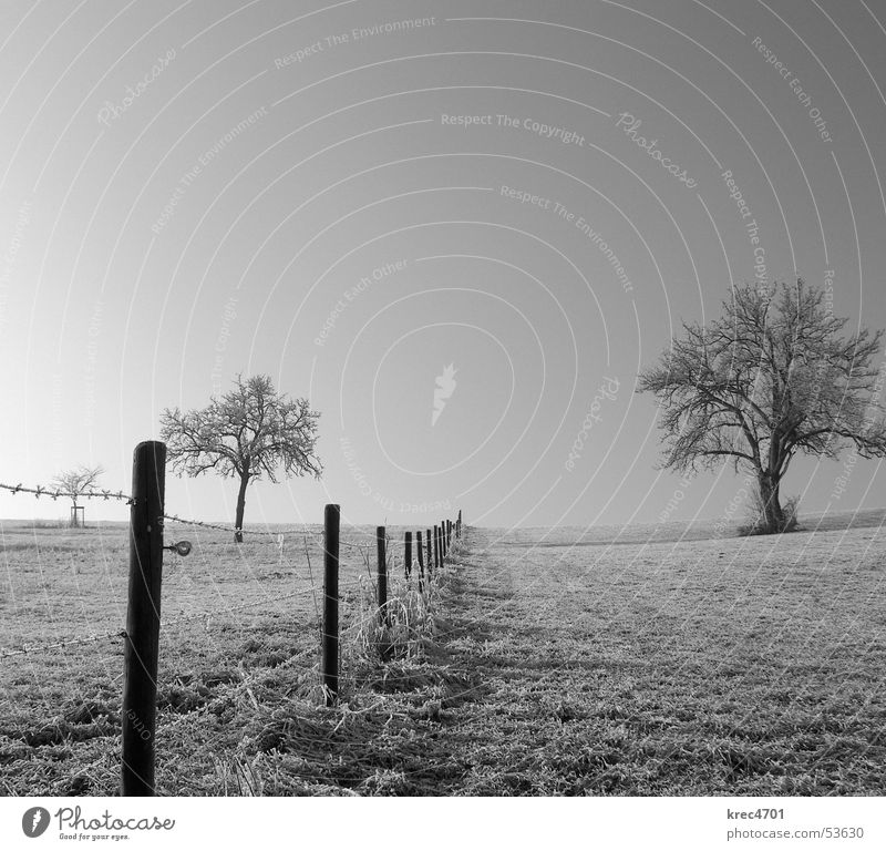 Sky Tree Winter Meadow Pasture Fence Blue sky Hoar frost Pasture fence