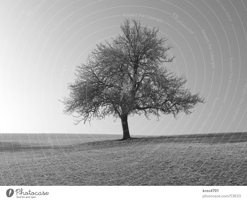 Single tree Tree Meadow Individual Loneliness Pasture Sky Blue sky Black & white photo unattached