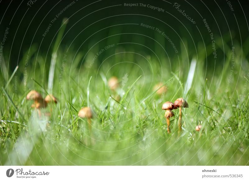 Nature Green Meadow Autumn Grass Attachment Mushroom Mushroom cap