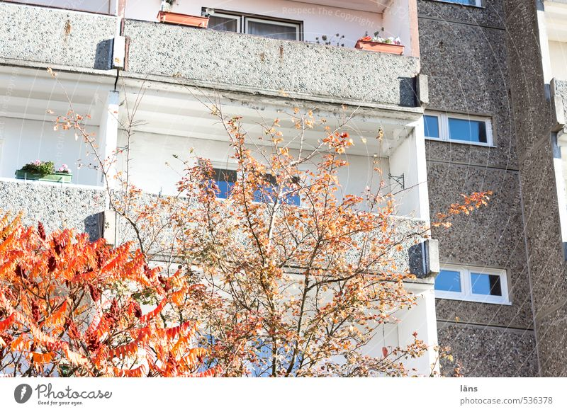 City Tree House (Residential Structure) Autumn Building Living or residing High-rise Transience Change Manmade structures Autumn leaves Environmental protection Autumnal Populated