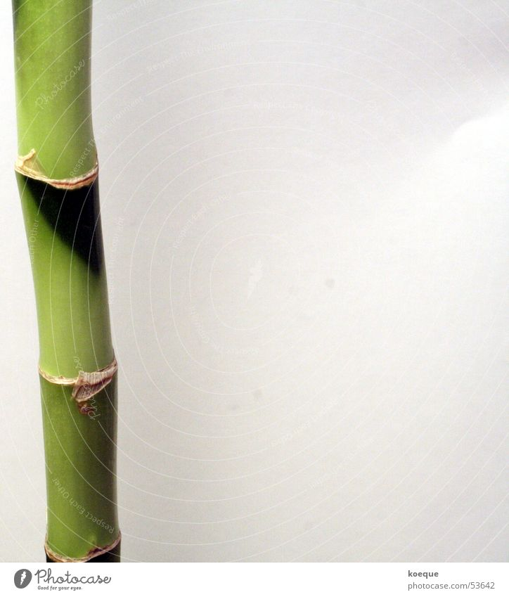 Nature Green Plant Infinity Bamboo stick