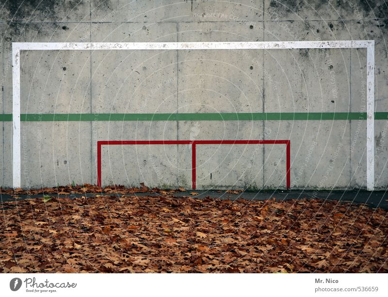 Green White Plant Red Leaf Environment Wall (building) Sports Autumn Wall (barrier) Playing Line Dirty Soccer Fitness Autumn leaves
