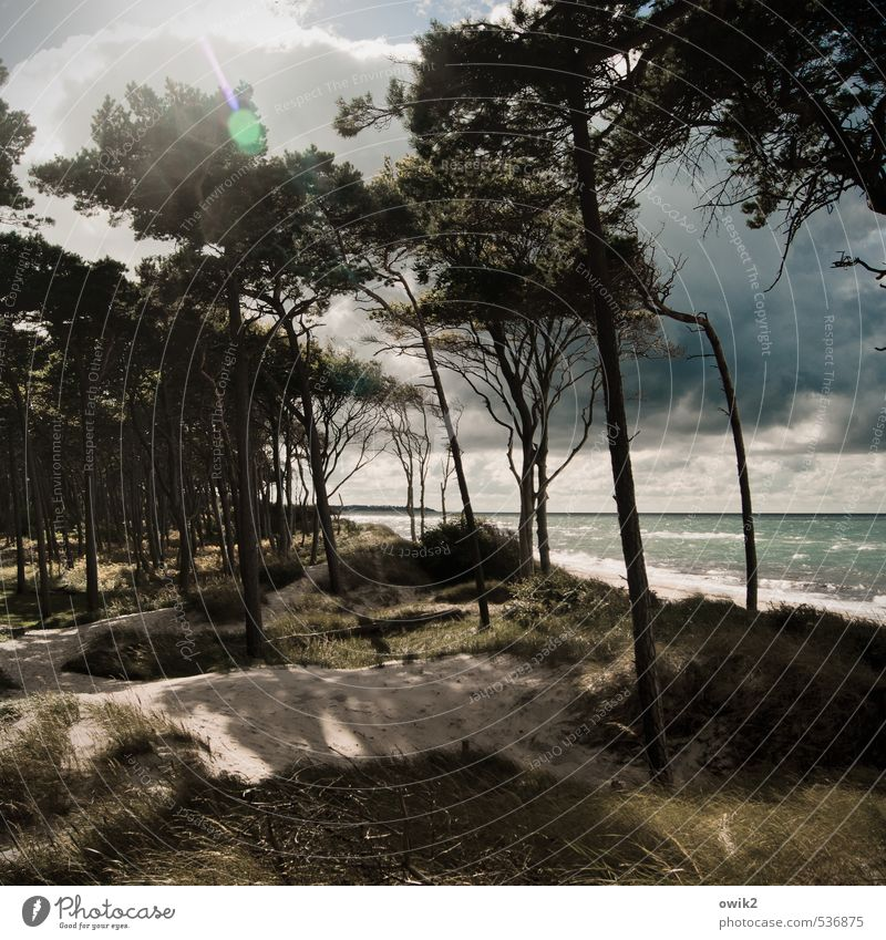 western beach Environment Nature Landscape Plant Sand Water Sky Storm clouds Horizon Climate Weather Beautiful weather Wind Tree Bushes Waves Coast Baltic Sea