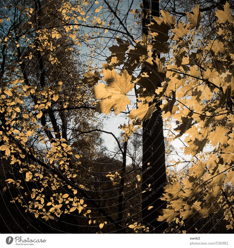 weather lightning Environment Nature Landscape Plant Cloudless sky Autumn Climate Weather Beautiful weather Tree Leaf Maple tree Maple leaf Twigs and branches