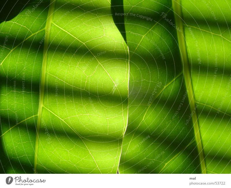 green leaves Leaf Plant Vessel 2 Similar Green Monochrome Force Stripe Venetian blinds Light Back-light Symmetry Rhythm Dark Calm Superimposed Multilayered