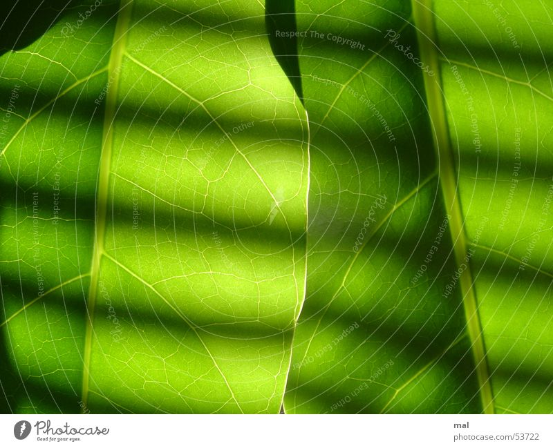 Nature Plant Green Colour Sun Leaf Calm Dark Bright 2 Illuminate Crazy Force Stripe Dynamics Positive