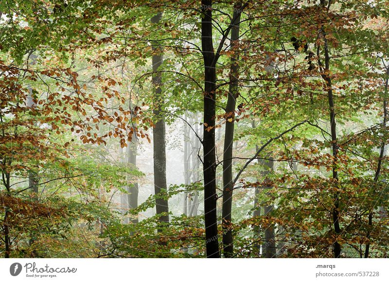 Nature Beautiful Summer Landscape Leaf Forest Environment Life Autumn Healthy Fog Fresh Trip Deciduous forest