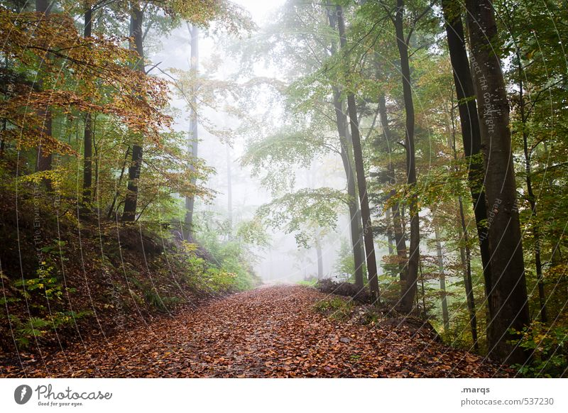 a way out Lifestyle Leisure and hobbies Trip Adventure Environment Nature Landscape Autumn Climate change Fog Forest Leaf Deciduous forest Lanes & trails