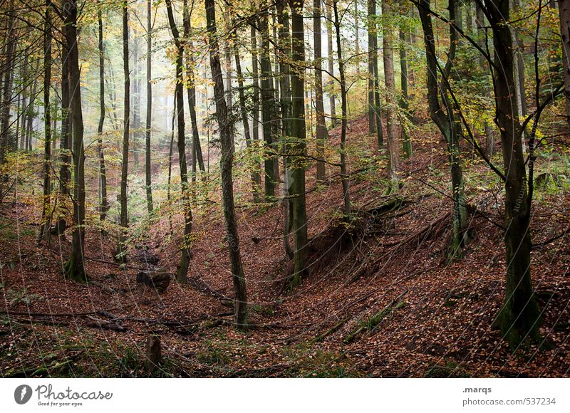 Wild Leisure and hobbies Tourism Trip Adventure Hiking Environment Nature Landscape Autumn Fog Forest Deciduous forest Leaf Simple Beautiful Moody Life