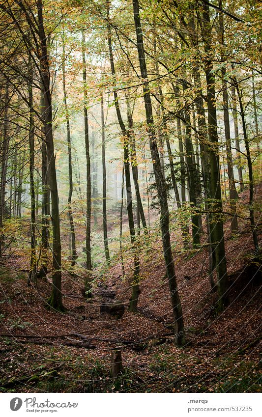 uncontrolled growth Leisure and hobbies Tourism Trip Adventure Environment Nature Landscape Autumn Fog Forest Deciduous forest Leaf Simple Tall Beautiful Moody