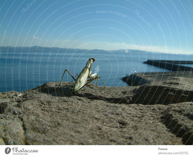 Water Ocean Mountain Coast Africa Harbour Spain Morocco Andalucia Tarifa Praying mantis Tanger-Asilah province