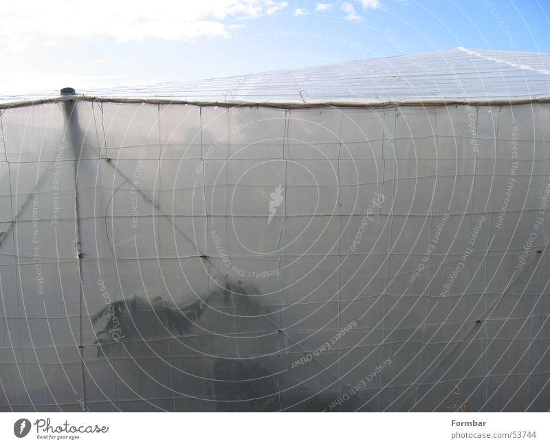behind fabric Tent Banana Banana plantation Ocean Clouds Plantation Cloth Grating Water
