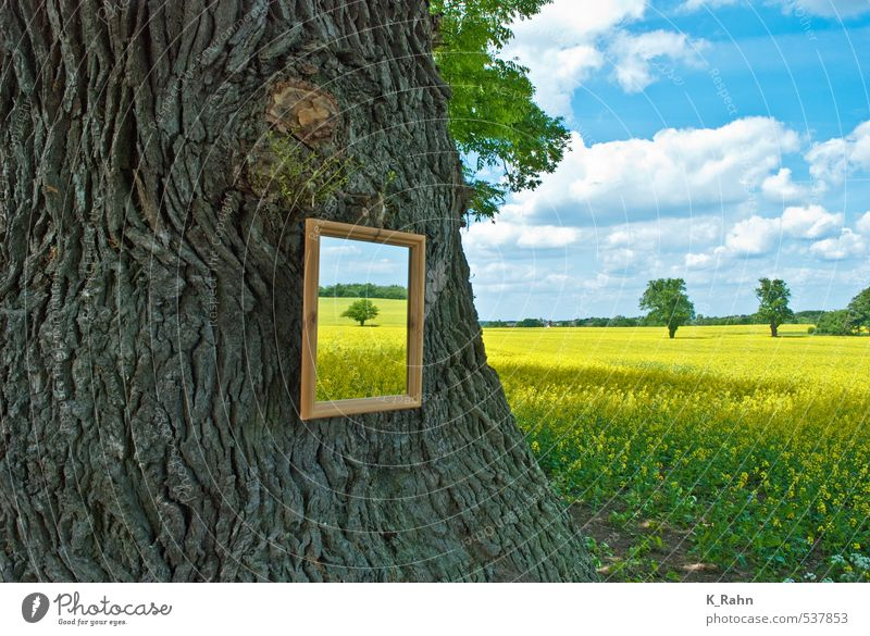 Mirrors of nature. Agriculture Forestry Painting and drawing (object) Nature Landscape Plant Sky Clouds Spring Summer Beautiful weather Tree Agricultural crop