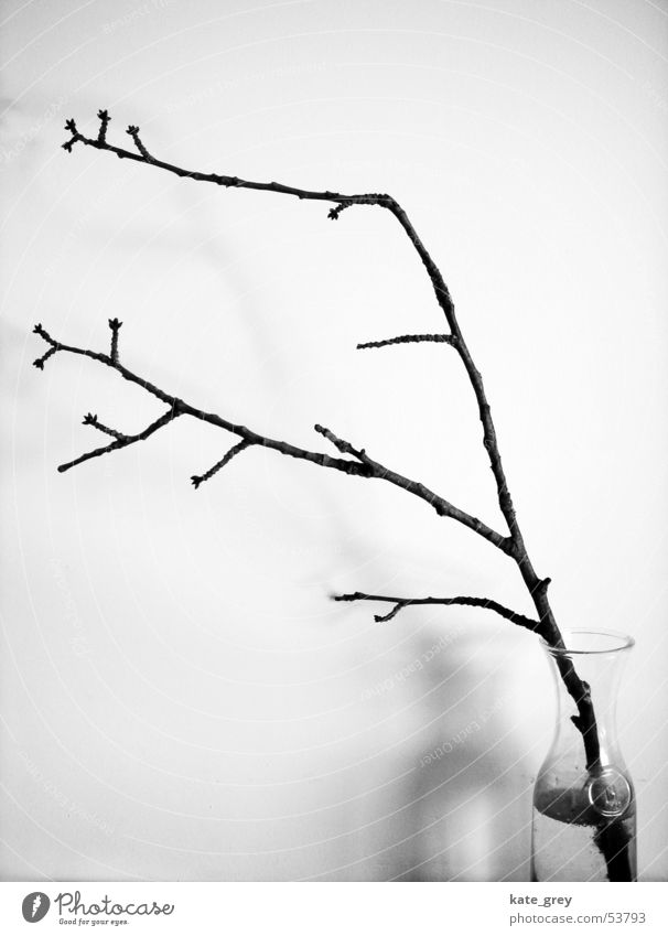 Nature White Tree Winter Black Bushes Branch Twig