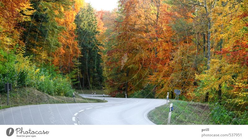 roadside autumn scenery Nature Landscape Autumn Tree Bushes Leaf Forest Street Brown Yellow Green Peaceful Rural Germany Hohenlohe sunny Orange panorama