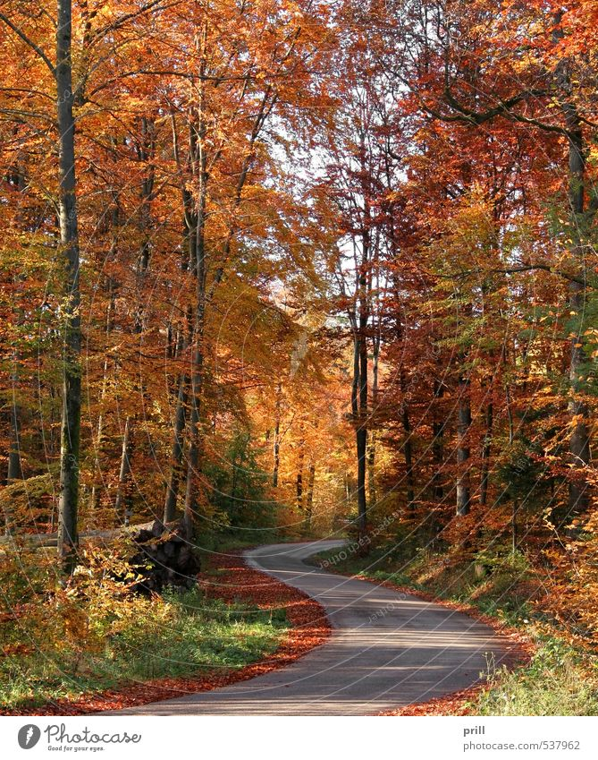 roadside autumn scenery Nature Landscape Autumn Tree Bushes Leaf Forest Street Lanes & trails Wood Brown Yellow Green Peaceful Lively trunk Rural Germany
