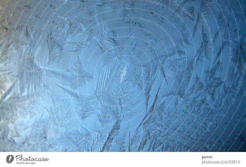 Berlin is frozen over Ice crystal Frozen Freeze Frostwork Cold Winter Crystal structure Window pane Water Star (Symbol)