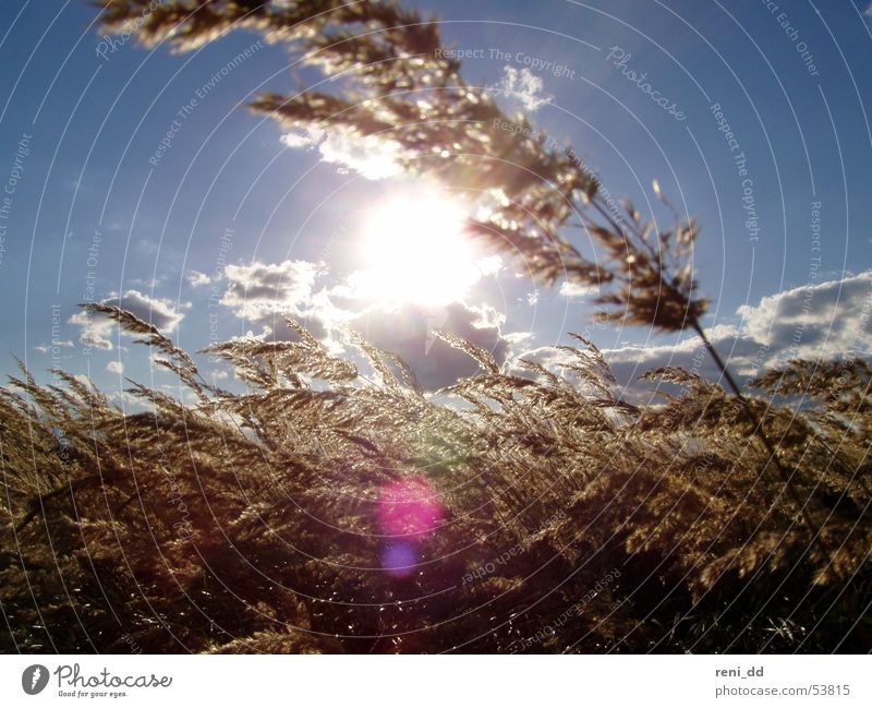 ray of hope Cornfield Clouds Air Grass Sky Sun Freedom Bright spot Movement Wind Grain