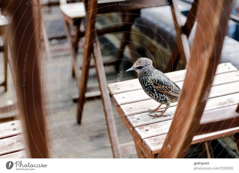 Birds of London II Downtown House (Residential Structure) Places Animal Wing 1 Spring fever Desire Voracious Chair Gastronomy Guest Cute Starling Wait Feeding