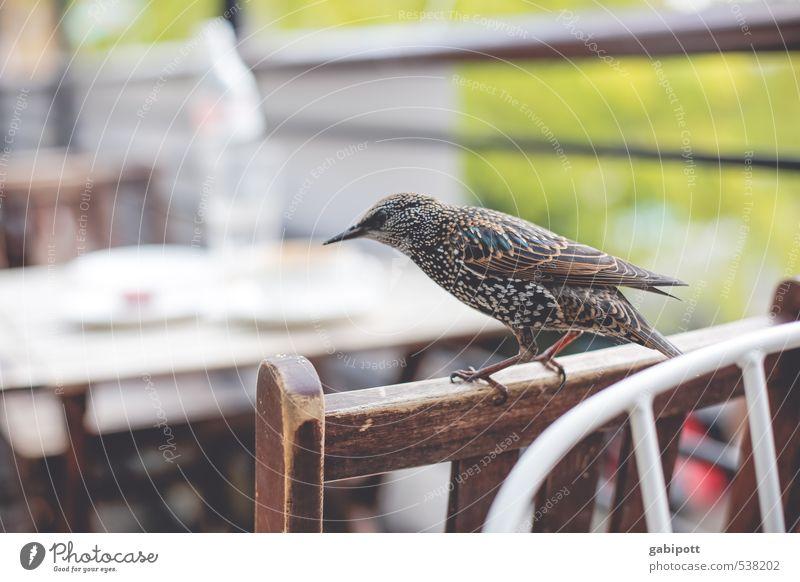 Nature Plant Joy Animal Movement Funny Bird Wild Wild animal Adventure Wing Curiosity Chair Gastronomy Animal face Brash