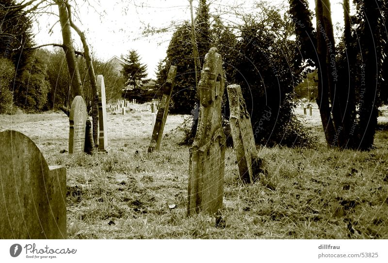 graveyard Grave Tombstone Tree Coffin Grief Cemetery Undead Loneliness Calm England Meadow Still Life Religion and faith Deities Devil Death Spook