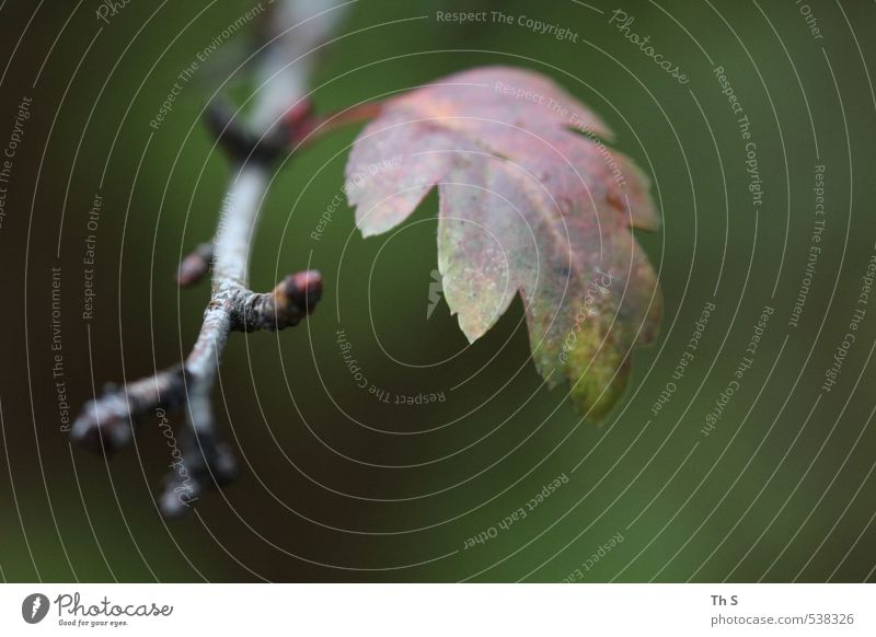 Nature Plant Leaf Environment Autumn Natural Esthetic Harmonious