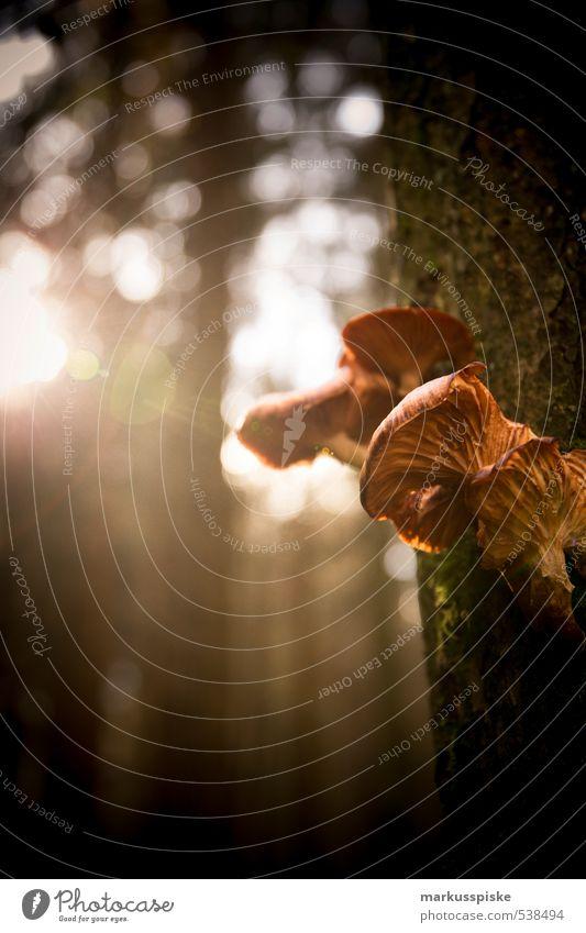 Nature Plant Tree Leaf Animal Forest Autumn Bright Park Illuminate Growth To enjoy Decline Moss Mushroom Wild plant