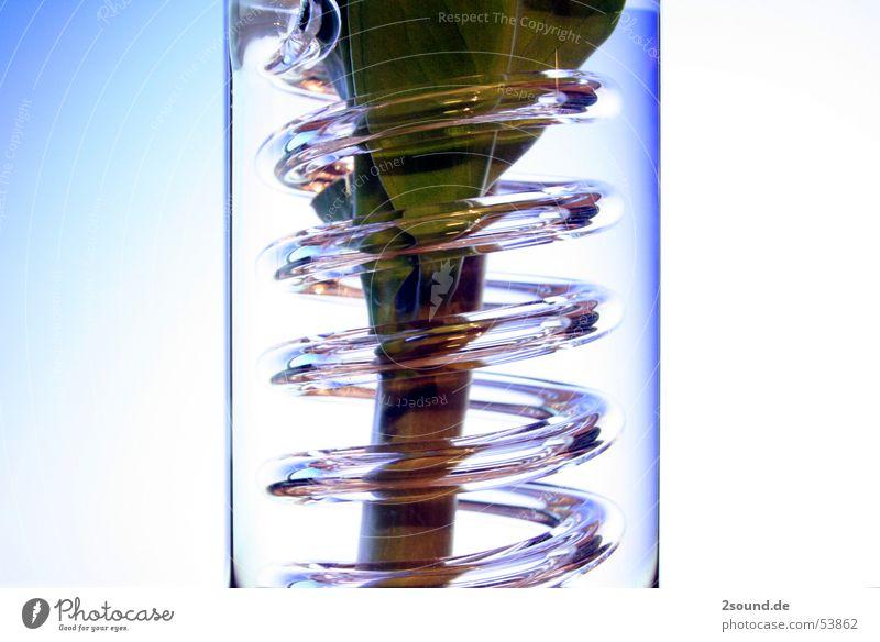 Plant Leaf Glass Circle Stalk Spiral Vase