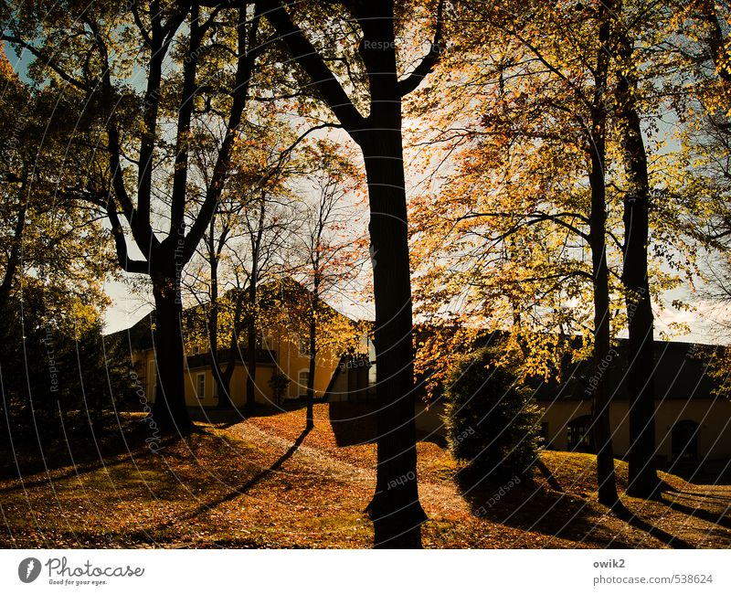 In the park of Schmochtitz Environment Nature Landscape Plant Sun Autumn Climate Weather Beautiful weather Tree Grass Park Germany Saxony Village