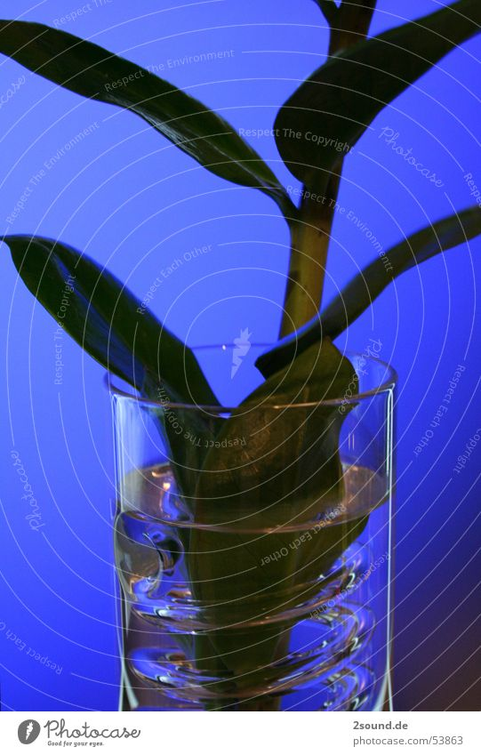 Curly vase 2 Plant Leaf Stalk Vase Circle Spiral ikea Glass