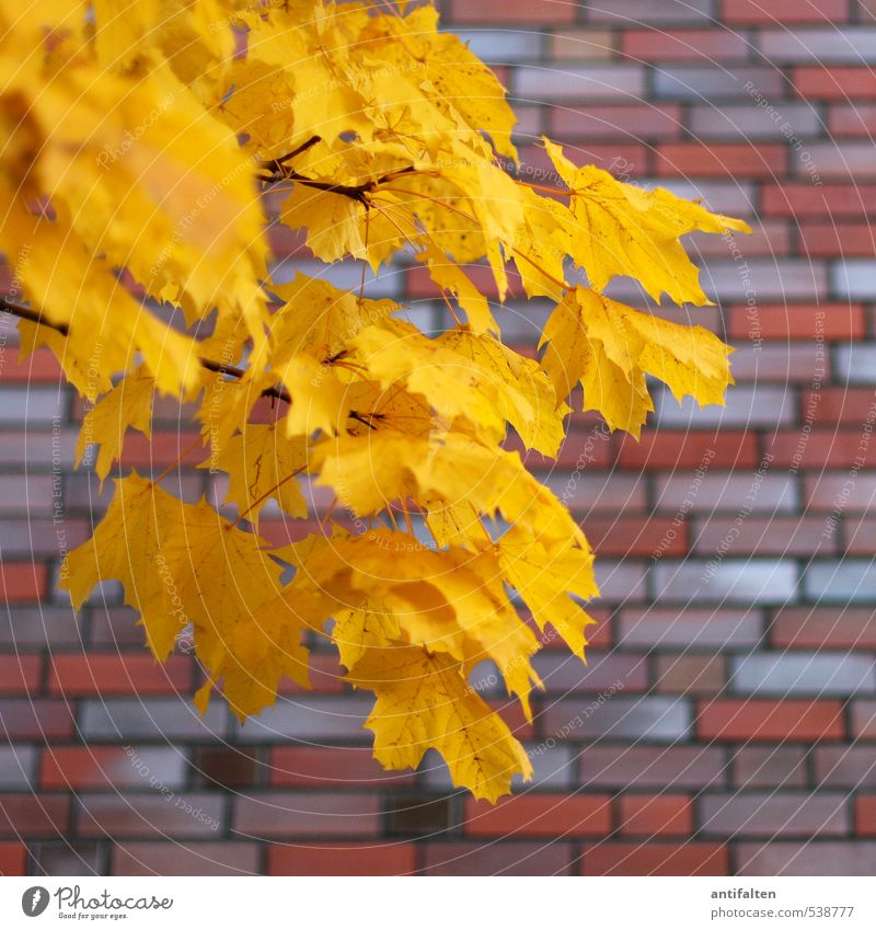 Nature City Beautiful Tree Red Leaf House (Residential Structure) Yellow Wall (building) Autumn Wall (barrier) Natural Line Brown Wind Beautiful weather