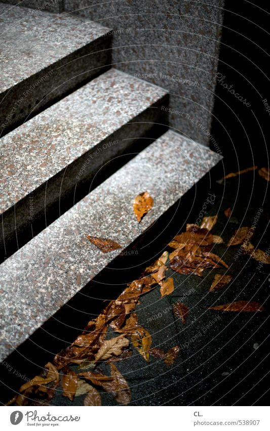 Through the night Autumn Bad weather Rain Leaf Deserted House (Residential Structure) Architecture Wall (barrier) Wall (building) Stairs Dark Wet Gloomy
